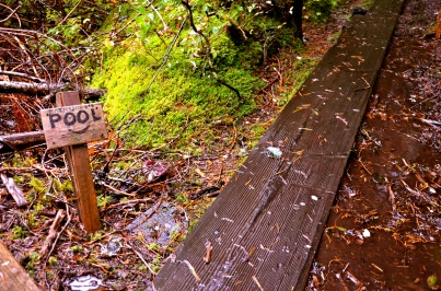 Baranof Trail to Hot Spring Alaska © Nicole Geils