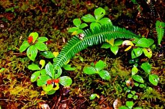Baranof Foliage © Nicole Geils