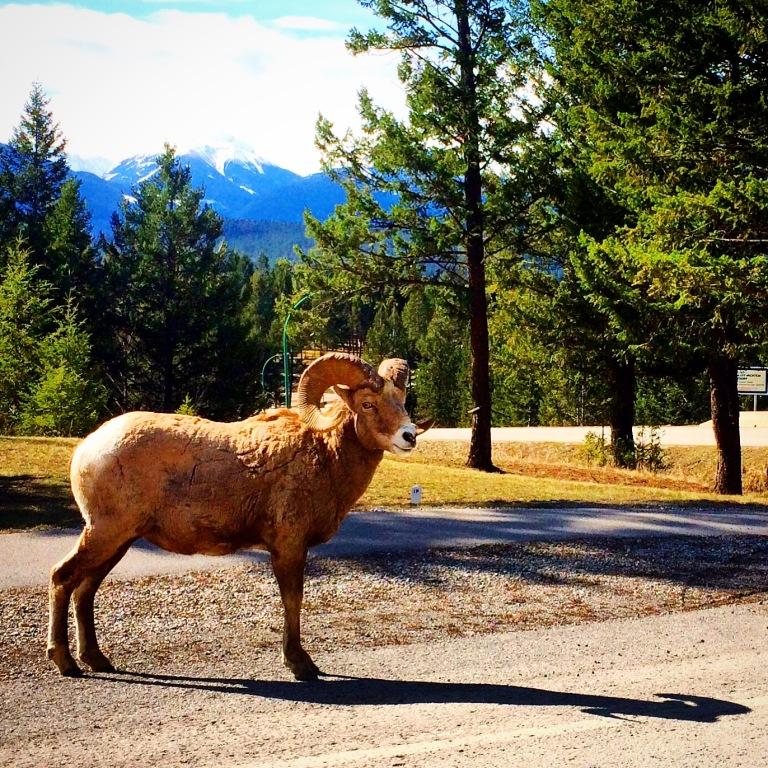 Roadtrip Wildlife